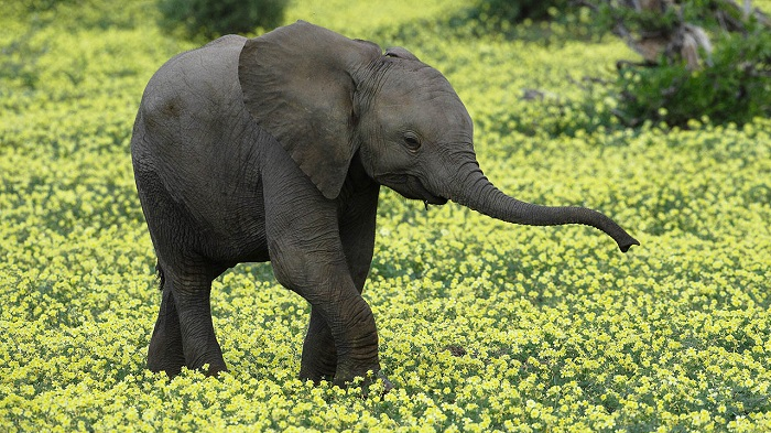 Ellie in the flowers by Kim Wolhuter