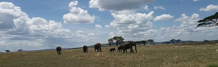 Exploring Tanzanias Northern Circuit
